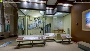 A screenshot from the the virtual tour of the Australian collection in the Smithsonian National Muse