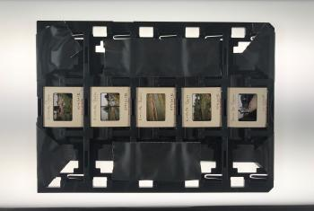 Black plastic tray with 35mm color slides arranged in a row down the middle.