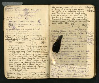 Color scan of a 19th snetury filed notebook opened, showing handwritten notes and a black insect spe