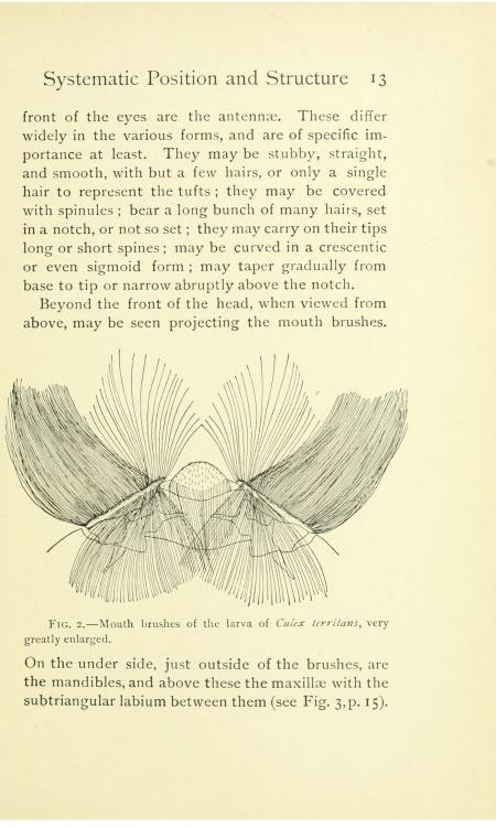 "Page 13 of the book, which includes an illustration of ""mouth brushes of the larva."""