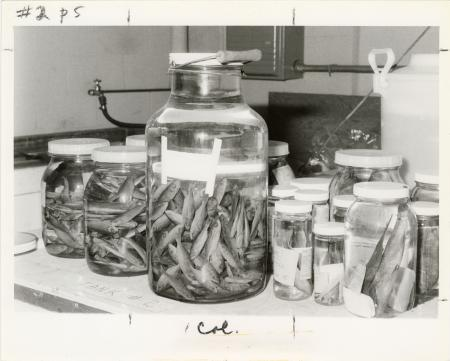 Fish Specimens in Jars at the Smithsonian Oceanographic Sorting Center (SOSC)