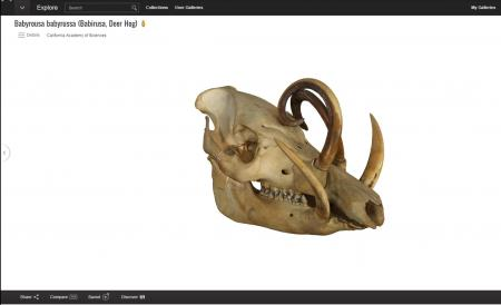 Google Art Project now has 3D objects from a variety of museums and galleries, including skulls.