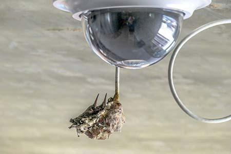 HummingBird Cam at the University of Arizona.