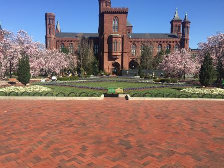 Tulip Magnolias & Smithsonian Castle, courtesy of author.