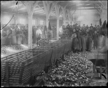 Oyster Cannery Workers