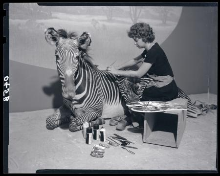 Taxidermist Sybil Costanzo Works on Zebra Model at Museum of Natural History