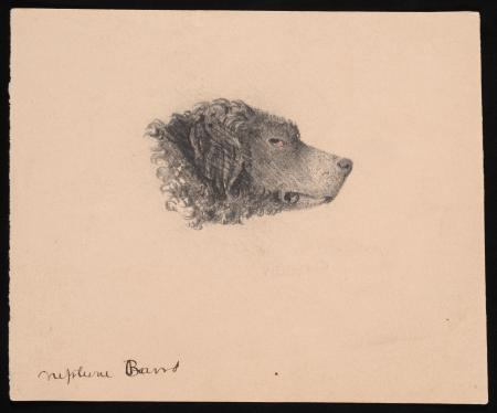 "Drawing of ""Neptune Baird,"" dog belonging to Spencer Fullerton Baird."