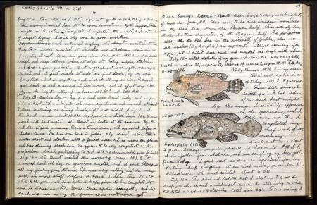 Page 68 of Donald Erdman's journal, which includes a drawing of a red and black Labrid [sic] and Epi