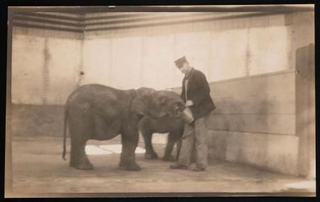A keeper feeds Asian elephants Hitam and Kechil in the octagonal elephant barn at the National Zoolo