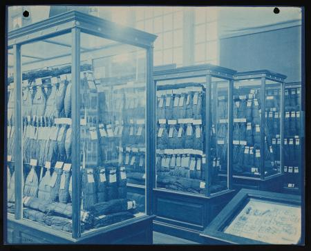 Cyanotype, Department of Agriculture exhibit at the Pan-American Exposition, Buffalo, New York, 1901