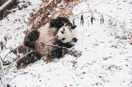 Snow Day at the Smithsonian's National Zoo, December 10, 2013. Courtesy of the National Zoo.