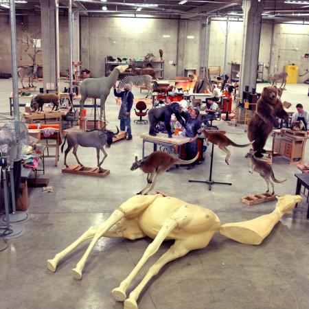Taxidermists Prepare Specimens