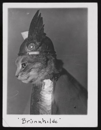 Photograph shows cat dressed in Viking helmet and shield.