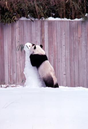 Giant Panda with Snowman