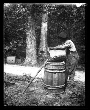 Worker collects crude gum on turpentine farm, 1880s.