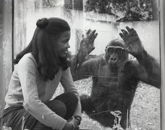 Lisa Stevens and a gorilla looking at each other through glass.