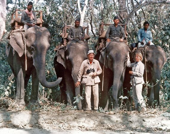 A man and woman in beige shirts and pants stand in front of four elephants. Four men are riding the