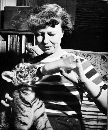 Lucile Mann sits with a tiger cub on her lap as she feeds it a bottle.