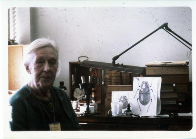 Color photograph of an elderly woman seated at her desk. Drawings of beetles can be seen on her desk