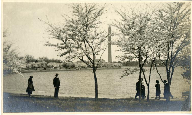 People in suits and long skirts walk around the Tidal Basin with cherry blossoms in the background.