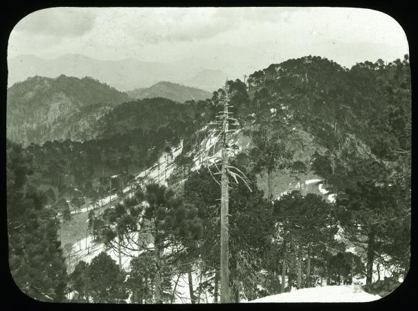 View of a snow-topped mountain. At the center of the photographs is a tree with trimmed branches and