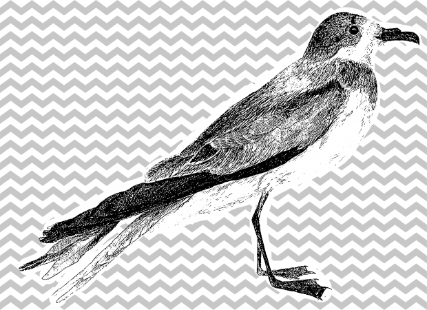 Bird with vertical zigzag drawings horizontal stripes in the background.