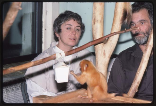A man and woman watch a small, orange monkey on a branch indoors. A carton of food is hanging on a b