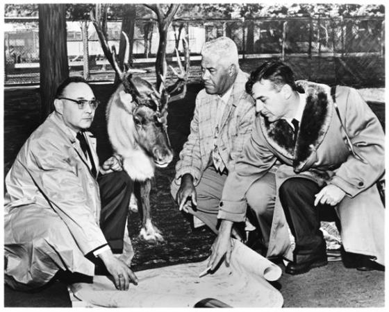 Three men and one reindeer stand around a map on the ground.
