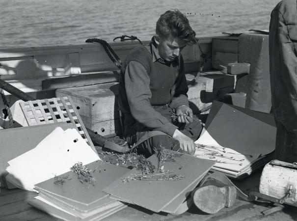 No. 40. Crew member preparing plant specimens for Smithsonian, off the east coast of Greenland, 1936