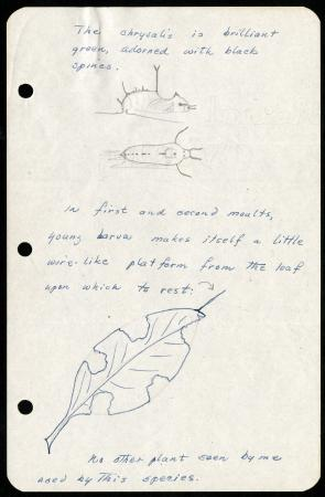 Frederick M. Bayer's Larval Notes, Page 4. Record Unit 7399, Smithsonian Institution Archives. Image