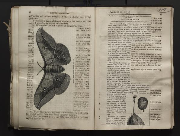 Two pages of a book with an image of a butterfly pasted sideways on the lefthand page and an article