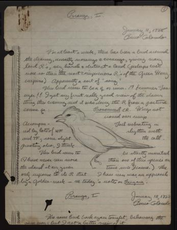 : Image of Moynihan's field book entry with a drawing of flame-colored tanager, dated January 11, 19