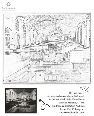 Page that includes a coloring page featuring an exhibit space at the US National Museum. A humpback