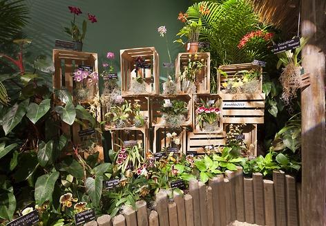 Orchids displayed in an array of wooden crates.