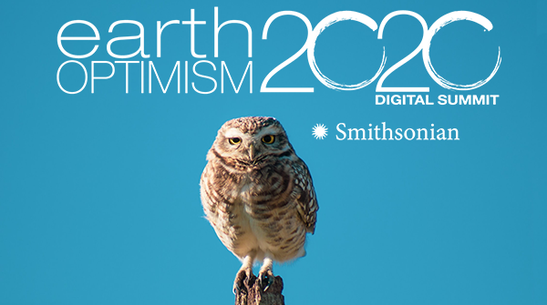 "The wording over the light blue poster is: ""earth optimism 2020."" A perched burrowing owl looks to t"