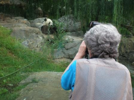 A woman photographs a panda.