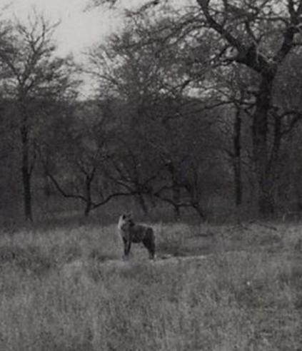 Alexander Wetmore's photos of the African wildlife, 1957.