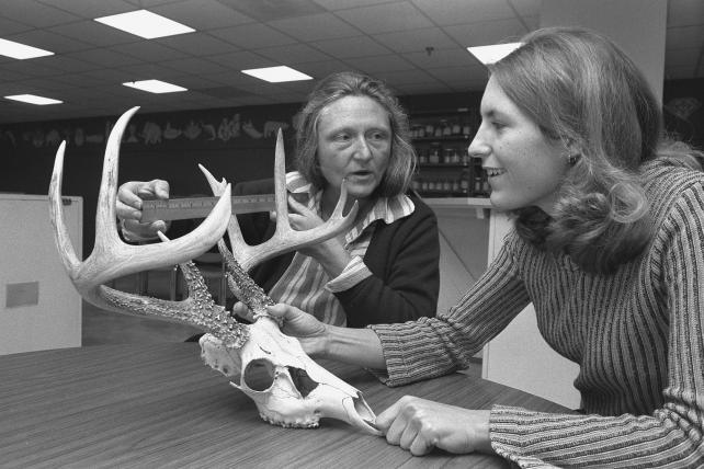 Volunteer Tracy Siani works with National Museum of Natural History Naturalist Center manager Irene Magyar to measure a mammal skull, 1978.