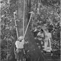 Three people stand near a tree trunk. One is holding a three-stick pole against the tree. Another person is pointing up toward the tree. The last person is taking notes.